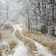 Frosty Trail Art Print