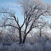 Frosty Trees 3 Art Print