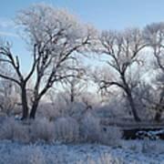 Frosty Trees Art Print