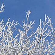 Frosty Winter Wonderland 01 Art Print