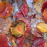 Frozen Autumn Aspen Leaves Art Print