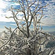 Frozen Backlight Art Print