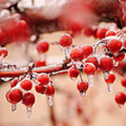 Frozen Berries Art Print