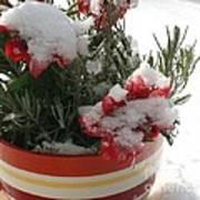 Frozen Christmas Flowers Art Print