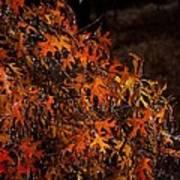 Frozen Fall Leaves Art Print