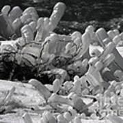 Frozen Falls Tundra Fingers Art Print