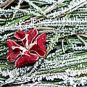 Frozen Flower Art Print