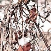 Frozen Harvest Art Print