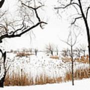Frozen Marshland IIi Art Print