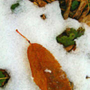 Frozen Nature - Digital Painting Effect Art Print