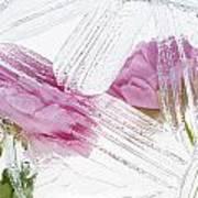Frozen Spring Iv Art Print