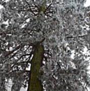 Frozen Tree 2 Art Print
