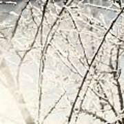 Frozen Tree Branches In Winter Art Print