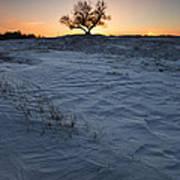 Frozen Tree Of Wisdom Art Print