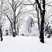 Frozen Tree On A Snow Field Art Print