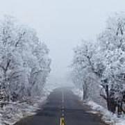 Frozen Trees Art Print