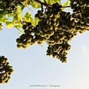 Fruits Of Nature Art Print