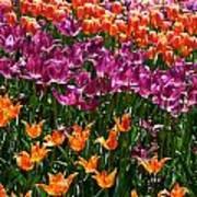 Fruity Tulips Art Print
