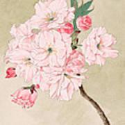 Fukurokuju - God Of Longevity - Vintage Watercolor Art Print