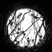 Full Moon And Poplar Branches Art Print
