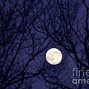 Full Moon Bare Branches Art Print