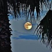 Full Moon Palm Tree 5 9/17 Art Print