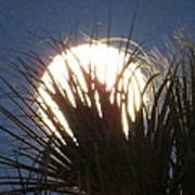 Full Moon Through The Palms Art Print