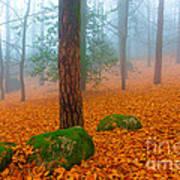 Full Of Autumn Art Print