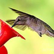 Fun Summer Hummingbird Art Print