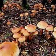 Fungi Forest Art Print by Steven Valkenberg
