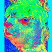 Funky Alpaca Baby Art Print