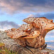 Funky Fungi Art Print