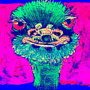 Funky Ostrich Cool Dude Art Prints Art Print