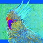 Funky Sulphur Crested Cockatoo Bird Art Prints Art Print