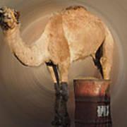 Funny Beduin Camel Talk  Art Print