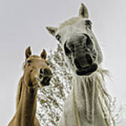 Funny Horses Art Print by Cindy Bryant