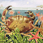 Furrowed Crab With Starfish Underwater Print by EB Watts