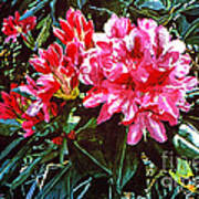 Fuschia Rhododendrons Art Print