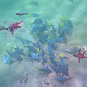 Galapagos Islands From Under Water Art Print
