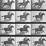 Galloping Horse Print by Eadweard Muybridge