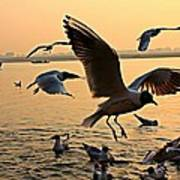 Ganges River Gulls Art Print