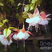 Garden Ballerinas Art Print