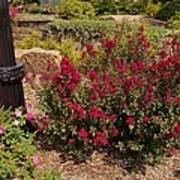 Garden Bush At Woodward Park 2f Art Print