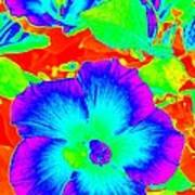 Garden Flowers / Solarized Effect Art Print