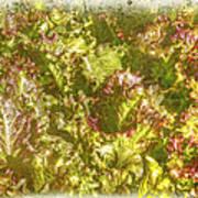 Garden Lettuce - Green Gold Art Print