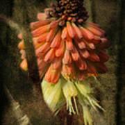 Garden Poker Flower Art Print