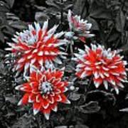 Garden Pom Poms Art Print