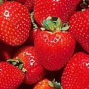 Garden Strawberries Art Print