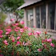 Gardens Of Pink Art Print