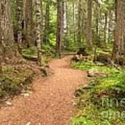 Garibaldi Path To Cheakamus Lake Art Print